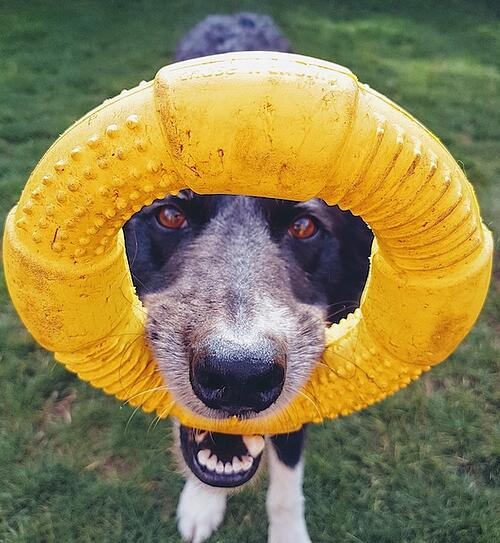 dog-playing-outside