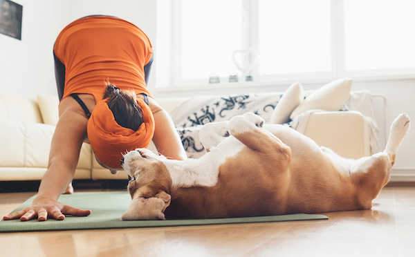 exercising-with-your-dog