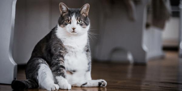 fat-cat-sitting