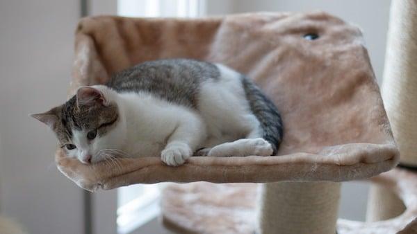 kitten-cat tree-comfortable