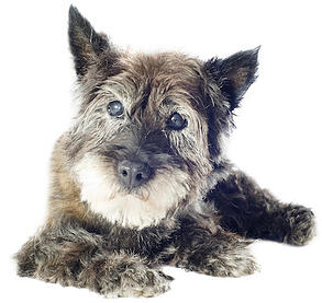 old-dog-lying-down
