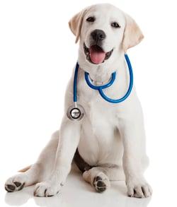 puppy-medical