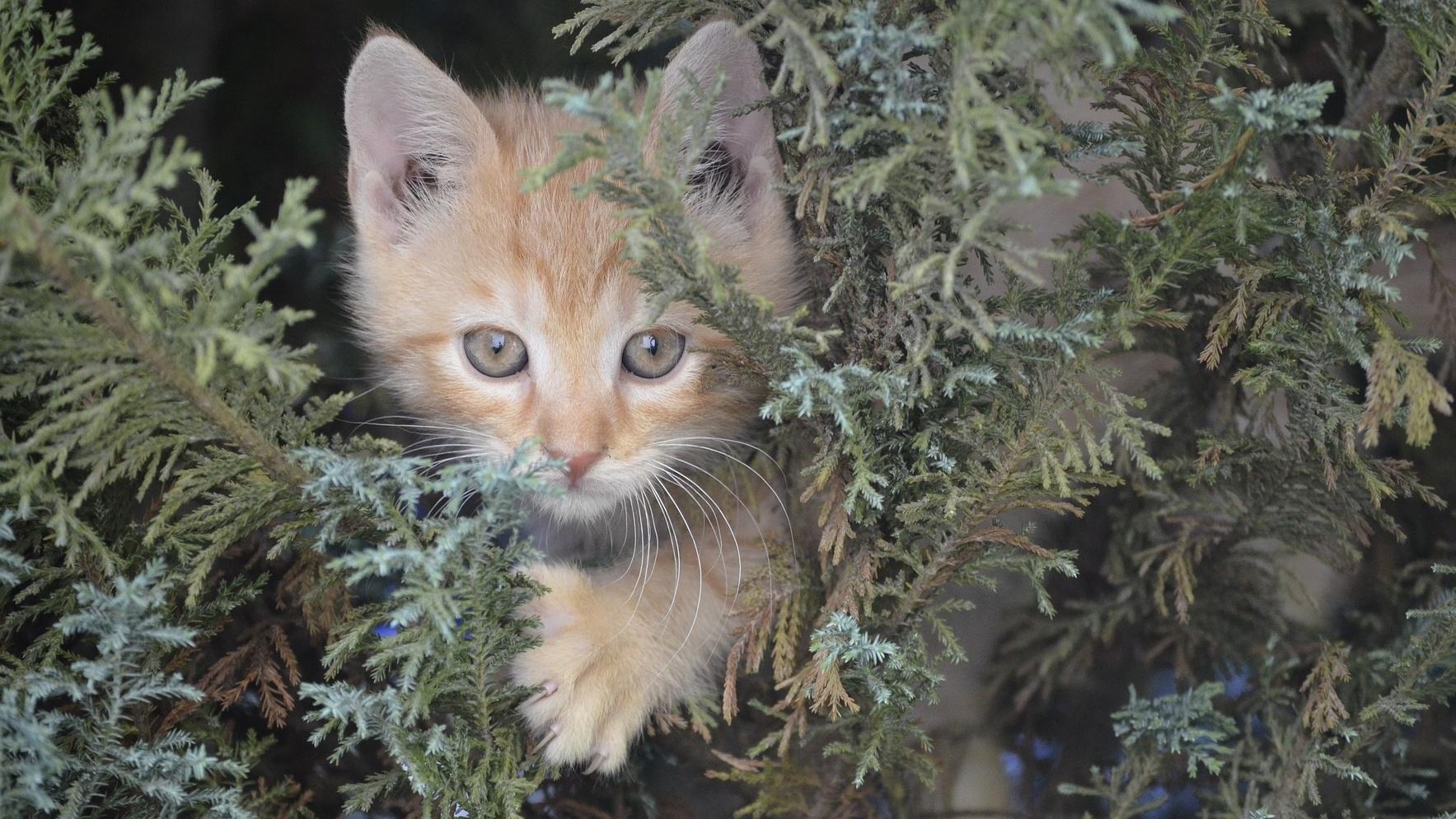 Kitten in Christmas Tree