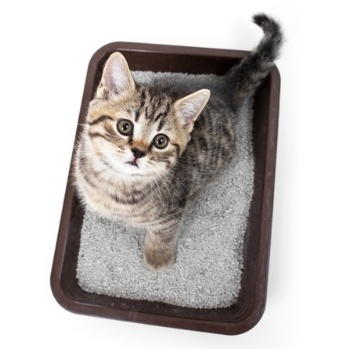 Cat Poop – How Often Should A Cat Go?