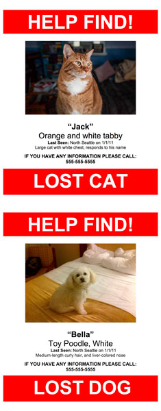 Create Your Poster Now  Lost Pet Poster