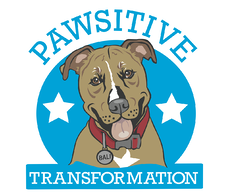 pawsitive-transformation-jennifer anderson