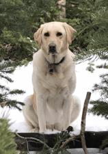 Lucy-dog-portrait-xylitol-toxicity