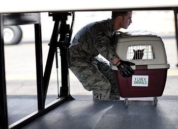 Man Loading Animal Carrier in Plane.jpg