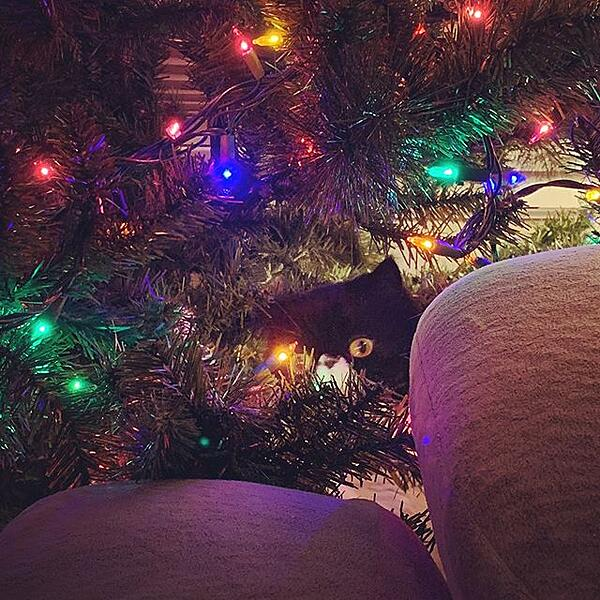 Mazel in the christmas tree