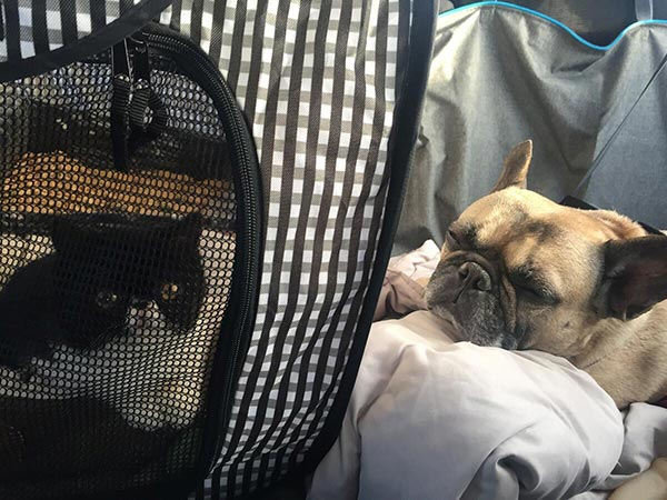 Mazel-Cat-Carrier-Travel
