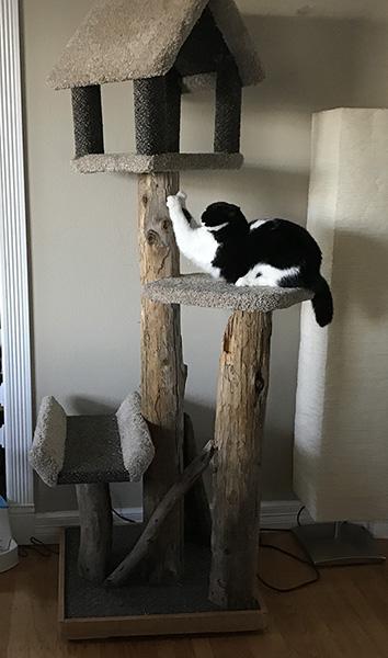 Mazel-cat-tree-scratching.jpg