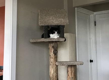 Mazel-sitting-in-cat-tree.jpg