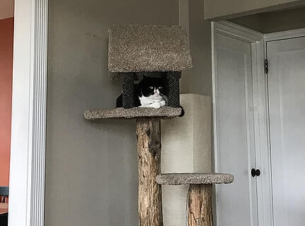 Mazel sitting in his cat tree
