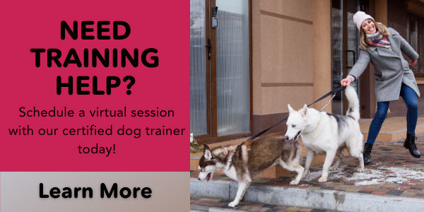 Need a dog trainer private virtual training sessions