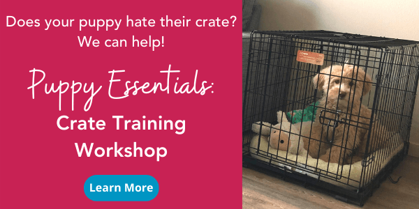 puppy crate training workshops