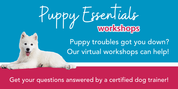Puppy Essentials Workshop