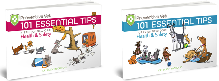 Preventive Vet 101 Essential Health and Safety Tips for Dogs and Cats
