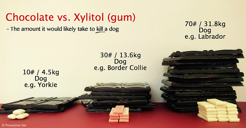 PV-Chocolate-vs-Xylitol-Gum.png