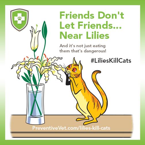 PV-Lillies-Kill-Cats.png