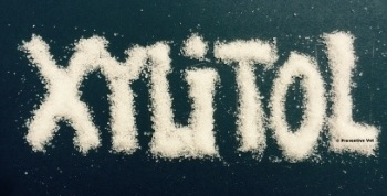 xylitol-toxicity-in-dogs