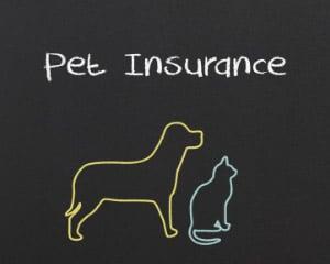 Pet-Insurance-Hot-Topic-300