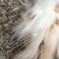 Pet-paws-foxtails-tip.jpg
