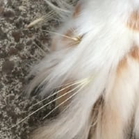 Dog With Foxtails in Paw