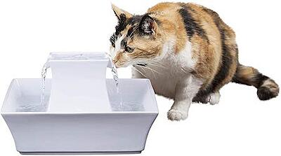 Cat drinking from water fountain