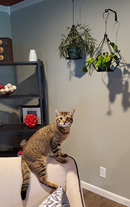 Plant hanging options with cats 1