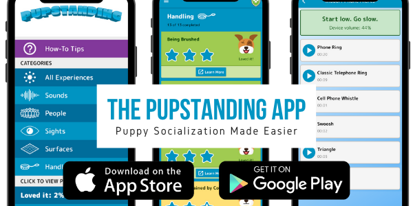 Proper Socialization Can Turn Your Pup into a Pupstanding Citizen