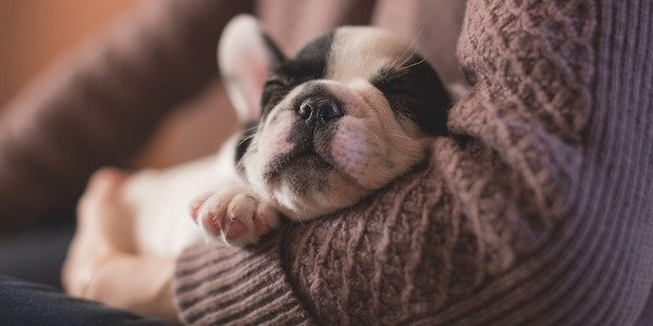 Puppy Sleeping Bed 600