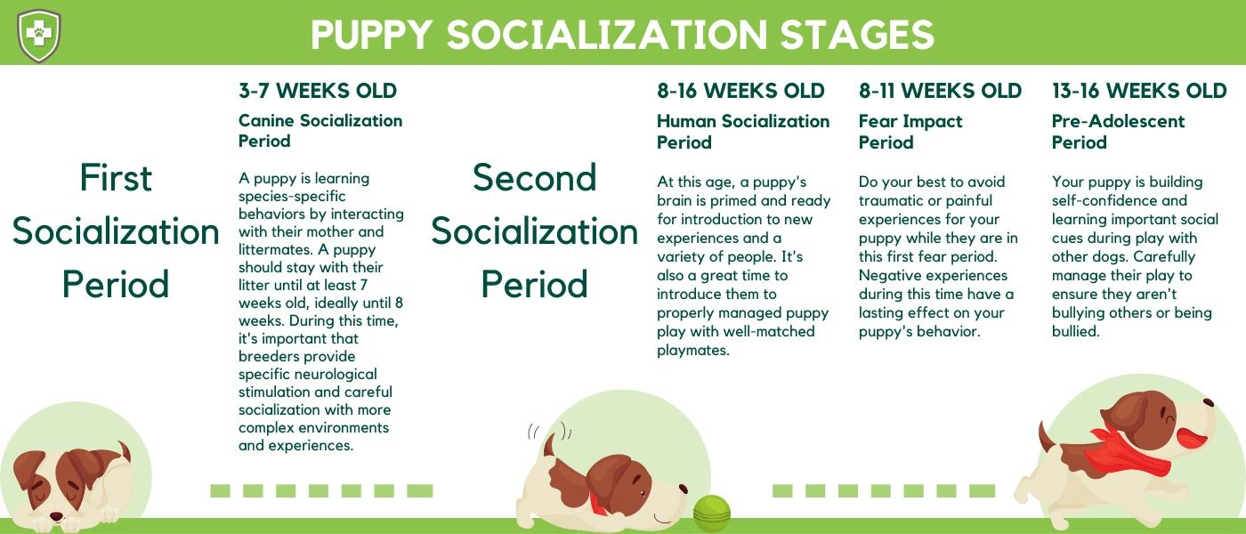 Puppy Socialization Stages