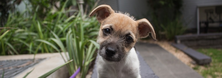 Puppy-outside-close-up.jpg