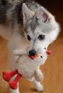 beware of stuffed and squeaky dog toys