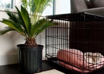 Sago-Palm-Dog-Crate
