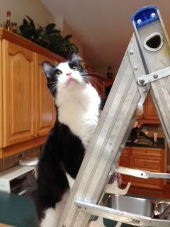 Sawyer-lost-cat-on-ladder.jpg