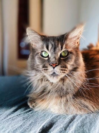 Senior-cat.jpg