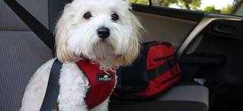Sleepypod Clickit dog car harness