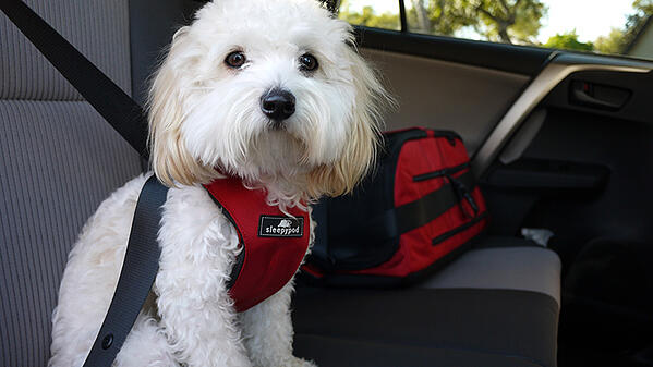 safest recommended dog travel harness