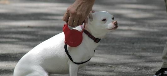 Small-dog-retractable-leash-landing