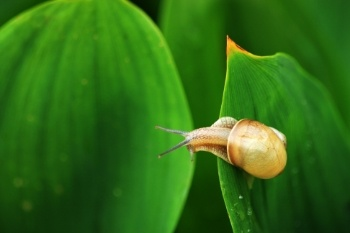 Snail-On-Leaf-Bait.jpg