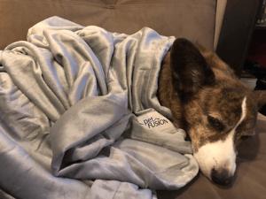 Sookie in petfusion blanket