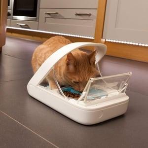 cat eating from surefeed microchip RFID pet feeder
