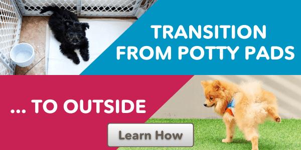 Transition from potty pads cta