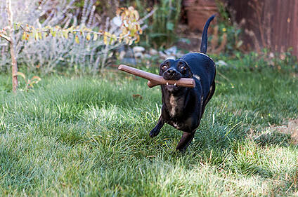 Leander enjoying the best fetch toy ever