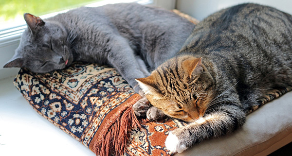 Two Cats on Windowsill