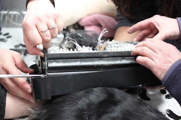 Dog-tail-caught-in-shredder