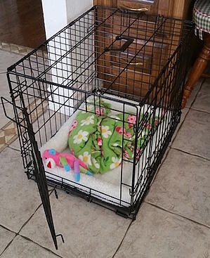 dog-crate-what-is-inside