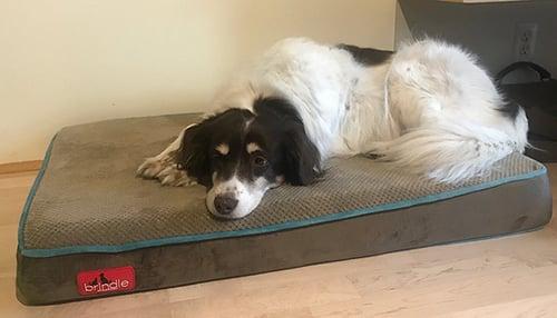 Wendy-dog-brindle-foam-bed-size-medium