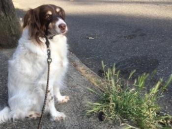Wendy-dog-walk-foxtails